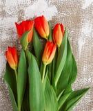 Rot-gelbe Tulpen auf einem hellen Hintergrund Frühling - Plakat mit Raum des freien Texts Stockfoto