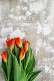 Rot-gelbe Tulpen auf einem hellen Hintergrund Frühling - Plakat mit Raum des freien Texts Lizenzfreies Stockbild