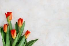 Rot-gelbe Tulpen auf einem hellen Hintergrund Frühling - Plakat mit Raum des freien Texts Stockbilder