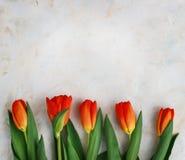 Rot-gelbe Tulpen auf einem hellen Hintergrund Frühling - Plakat mit Raum des freien Texts Lizenzfreie Stockbilder