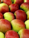 Rot-grüne Äpfel Stockbild