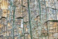Rot hout Royalty-vrije Stock Afbeeldingen