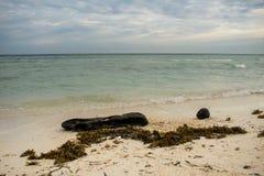 Rot logboek met mos die op het strandzand leggen stock afbeelding