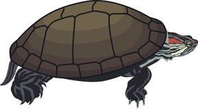Rot-ohrige Schieberschildkröte des Vektors Lizenzfreies Stockfoto