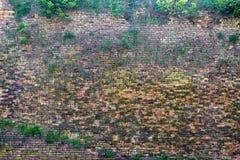 Rot-orange Backsteinmauer überwältigt mit Gras 3 Stockfotografie