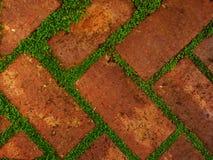 Rot schattierte Ziegelsteine mit den Abständen, die durch belaubtes grünes Wachstum gefüllt wurden Stockbild
