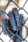 Rot--shanked Kleideraffe im Zoo Stockfotografie