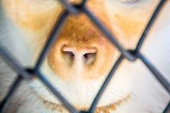 Rot--shanked Kleideraffe im Zoo Lizenzfreie Stockfotos