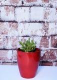 Rot spitzte Succulent in einem roten Vase gegen Ziegelsteinhintergrund Stockbild