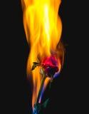 Rot stieg auf Feuer Stockfotos