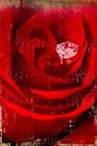 Rot stieg auf gealterte Wand Stockbild