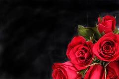 Rot stieg auf schwarzen Hintergrund Stockbild