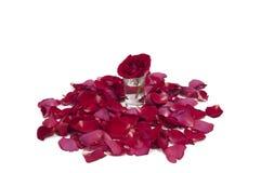 Rot stieg in Blumenblätter Stockbilder
