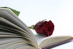 Rot stieg in ein Buch Stockfoto