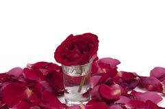 Rot stieg in ein Glas, das durch Blumenblätter umgeben wurde Stockbild