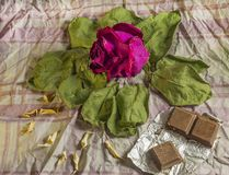 Rot trocknen Sie Rosafarbenes auf alten Blättern lizenzfreie stockfotos