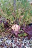 Rot u. weiß in der Blüte lizenzfreie stockbilder