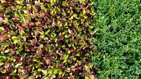 Rot-und Grün-Blätter Lizenzfreies Stockfoto