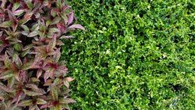 Rot-und Grün-Blätter Stockbilder
