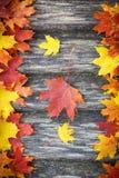 Rot und Orange färbt Efeublattnahaufnahme Stockbilder