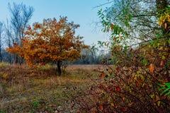 Rot und Orange färbt Efeublattnahaufnahme Stockfoto