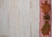Rot und Orange färbt Efeublattnahaufnahme Lizenzfreie Stockbilder