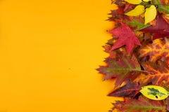 Rot und Orange färbt Efeublattnahaufnahme BUNTE BLÄTTER GESTALTEN GEGEN GELBEN HINTERGRUND Hohe Winkelsicht stockfoto