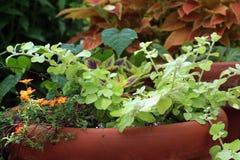Rot und orange und grüne Blumen im Topf lizenzfreies stockfoto