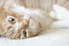 Rot-und-weiße Katze Lizenzfreies Stockbild