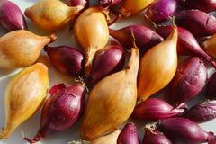 Rot- und yelowsteckzwiebeln bereit zum Pflanzen Lizenzfreies Stockfoto