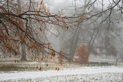Rot verlässt auf den Niederlassungen des Baums im Park im Nebel Lizenzfreie Stockfotos