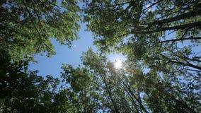Rotação convergente da rotação de Sun do céu das árvores dos verticais video estoque