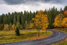Rotação da estrada de floresta fotos de stock
