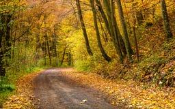 Rotação da estrada na floresta do outono imagem de stock