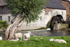 Rotação da roda de pá de um moinho de água histórico em Wijlre, Países Baixos fotografia de stock royalty free