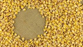 Rotação das grões do milho que encontram-se no pano de saco com espaço para seu texto filme