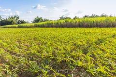 Rotação de colheita fotografia de stock