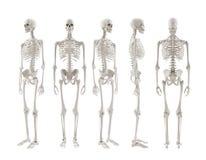 Rotação de esqueleto imagens de stock royalty free