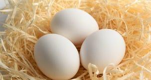Rotação do ovo branco vídeos de arquivo