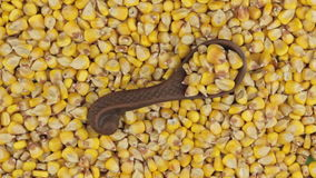 A rotação e o zumbido do milho em uma argila dão o encontro no fundo de sementes do milho filme