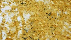Rotação sobre as folhas congeladas da nogueira-do-Japão video estoque