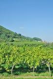 Rota alemão do vinho, palatinado, Alemanha Foto de Stock