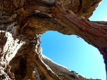 Rota av ett dött träd royaltyfri bild