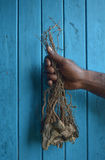 Rota av Kava för jordbruksprodukter för pepparväxten den van vid drinken royaltyfri bild