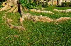 Rota av träd Arkivbild