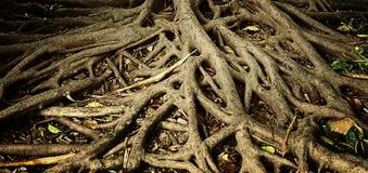 Rota av träd Arkivfoto