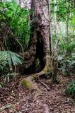 Rota av tree fotografering för bildbyråer