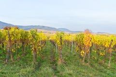 Rota do vinho de Alsácia Fotografia de Stock Royalty Free