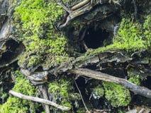 Rota från ett stupat träd Arkivbilder