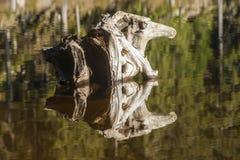 Rota i form av ett mytiskt diagram i sjön Mummelsee fotografering för bildbyråer